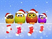 family of owls at Christmas