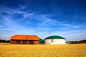 Barn and biogas plant