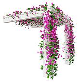 Bougainvillea flowers on pergola