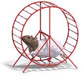 cute hamster in a hamster wheel