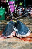 dead sharks