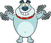 Gray Bulldog With Dumbbells