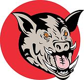 Wild pig\'s head front on