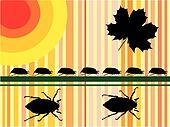 may beetles - vector