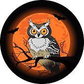 Owl night