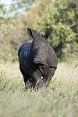 Rhino Baby Feeding