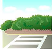 Road  Zebra