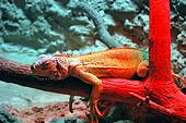 Reptile On Red