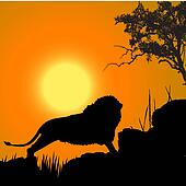 silhouette view of lion, wildlife, sun background