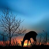 silhouette view of a deer eating grass