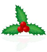 christmas holly berry illustration