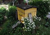 Bee hive in garden.