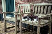 cat sleeps on an chair
