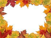 Mixed-Leaf Frame