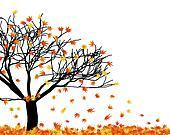 naked maple tree