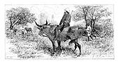 Soldier Riding a Buffalo in Angola, Southern Africa, vintage engraving