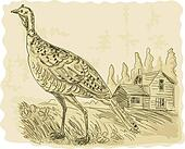 illustration of a Wild turkey with house in the background