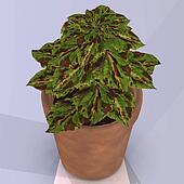 Flower in a pot Image contains a Clipping Path / Cutting Path for the main object