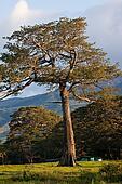 A big tree in the morning sun