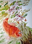 Darkblotched Rockfish