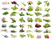 Medicinal plants isolated set.