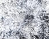 The texture of fur white wolf