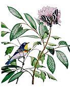 Northern Parula Zebra Swallowtail
