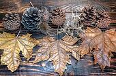 Autumn design leaves, prickle