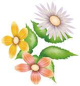 daisy,wild flower