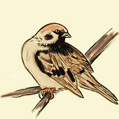hand drawn tree sparrow on branch