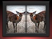 Cloned Deer