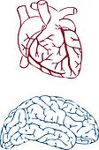 heart and brain, vector