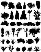 trees and shrubs silhouettes