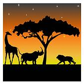 Night in the African savanna