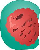 Raspberry fruit illustration