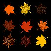 Leaves of maple tree collection