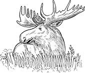 drawing  illustration of a moose