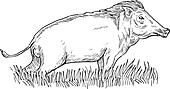 wild boar or pig done in black and white
