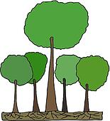 Tall tree in Forest Vector