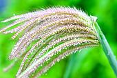 grass and dew
