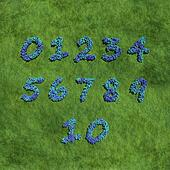 numbers create by blue flowers with grass