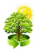 green tree oak as ecology symbol