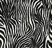 zebra pattern print