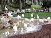 Stork Birds