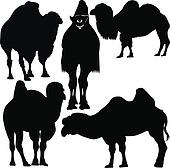 animals camel vector