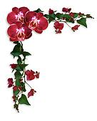 Orchids and Bougainvillea floral border