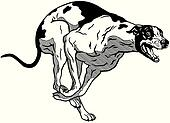 runnin greyhound black white
