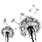 Black dandelion in the wind