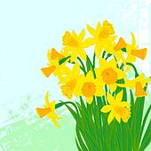 Vector card with daffodils on textured background.
