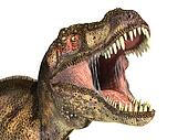 Tyrannosaurus Rex dinosaur, photorealistic representation, Scientifically correct. Head close up, with open mouth. On white background, clipping path included.